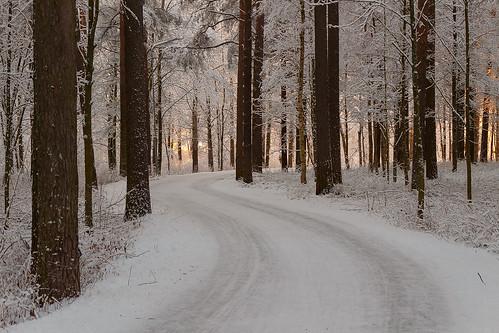 winter snow tree pine finland way trail birch aspen oulu