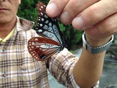 青斑蝶大叔福村克己在龍潭山標放青斑蝶,LTS代表龍潭山。