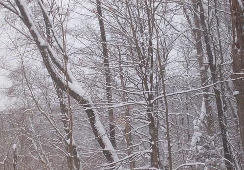 snowy trees 3