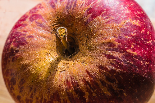 apple macro by joeeisner