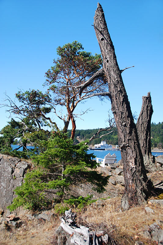 Roe Islet in Roesland, North Pender Island, Gulf Islands National Park, British Columbia, Canada