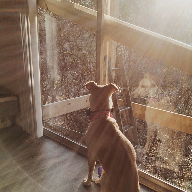 shiso in the sunlight