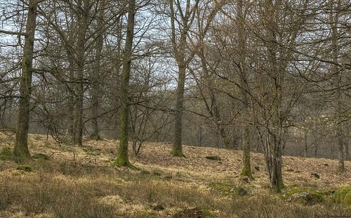 trees tree 50mm spring oak cloudy mark meadow overcast pasture hdr västragötaland västergötland 3exposurehdr sjuhärad öresten