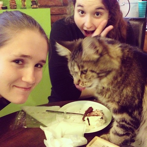 A cat on the table licks its lips over a near-empty plate while Abbie and Grace look on.