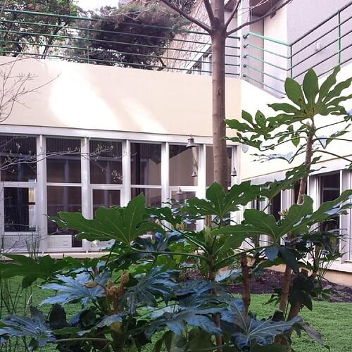 Jardin zen au #bikramyoga ♡