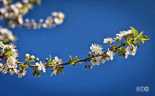 Potranno recidere tutti i fiori ma non potranno fermare la primavera. (Pablo Neruda)