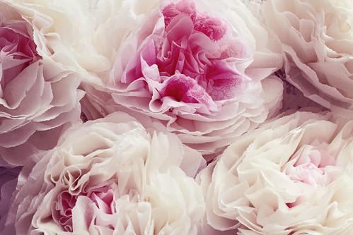 napkin blooms