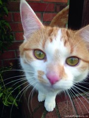 Mon, Apr 14th, 2014 Lost Male Cat - The Local Area, Arbour Hill, Dublin
