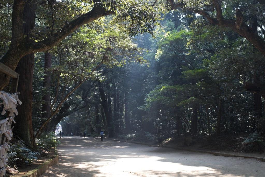 2015.08.01 光さす - 鹿島神宮 参道