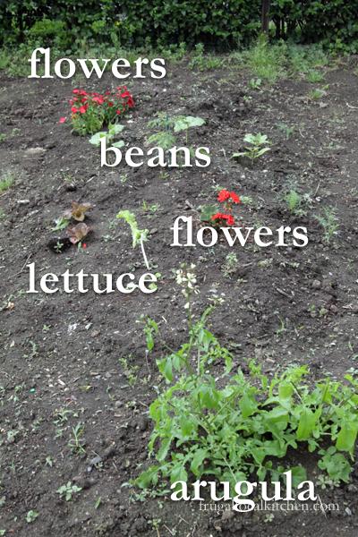 kids-garden-planted-3