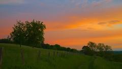 Sur le chemin du lit du soleil (Bucey-les-Gy)