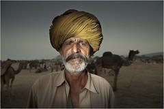 Camel Mela II