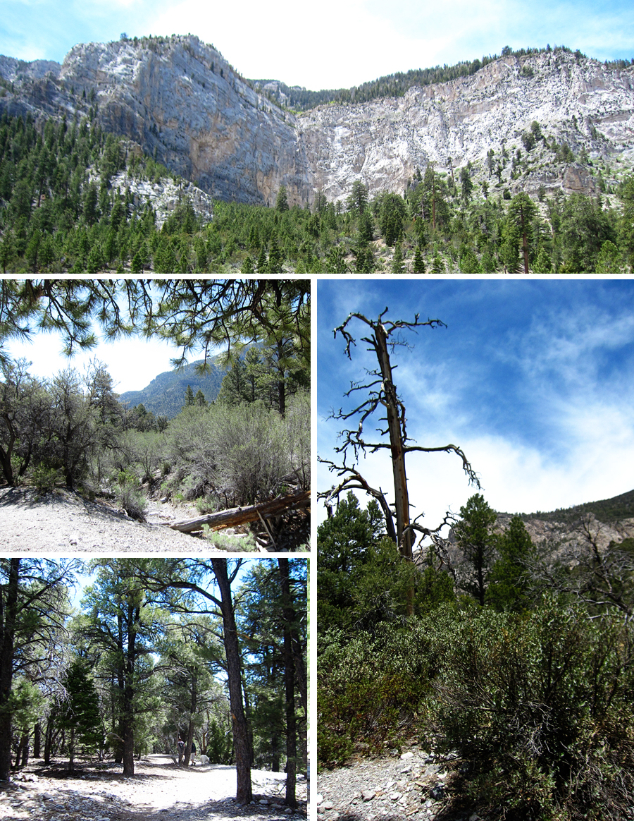 fletcher canyon, mt. charleston