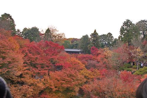 【写真】2012 紅葉 : 東福寺(2)/2017-11-27/IMGP7159