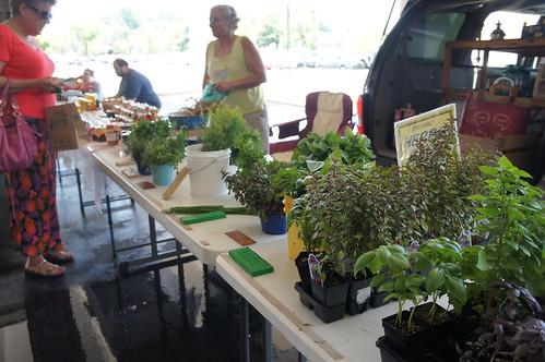 westfield annapolis farmers market