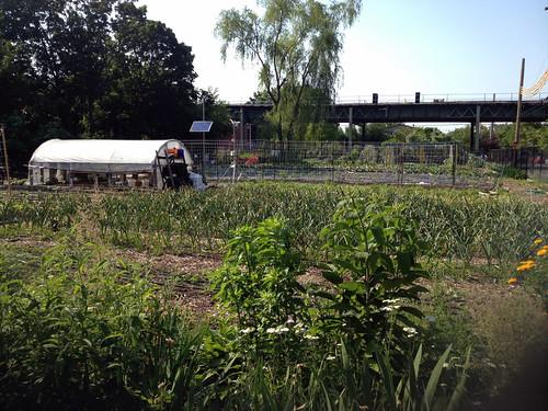East New York Farm, Brooklyn, NYC