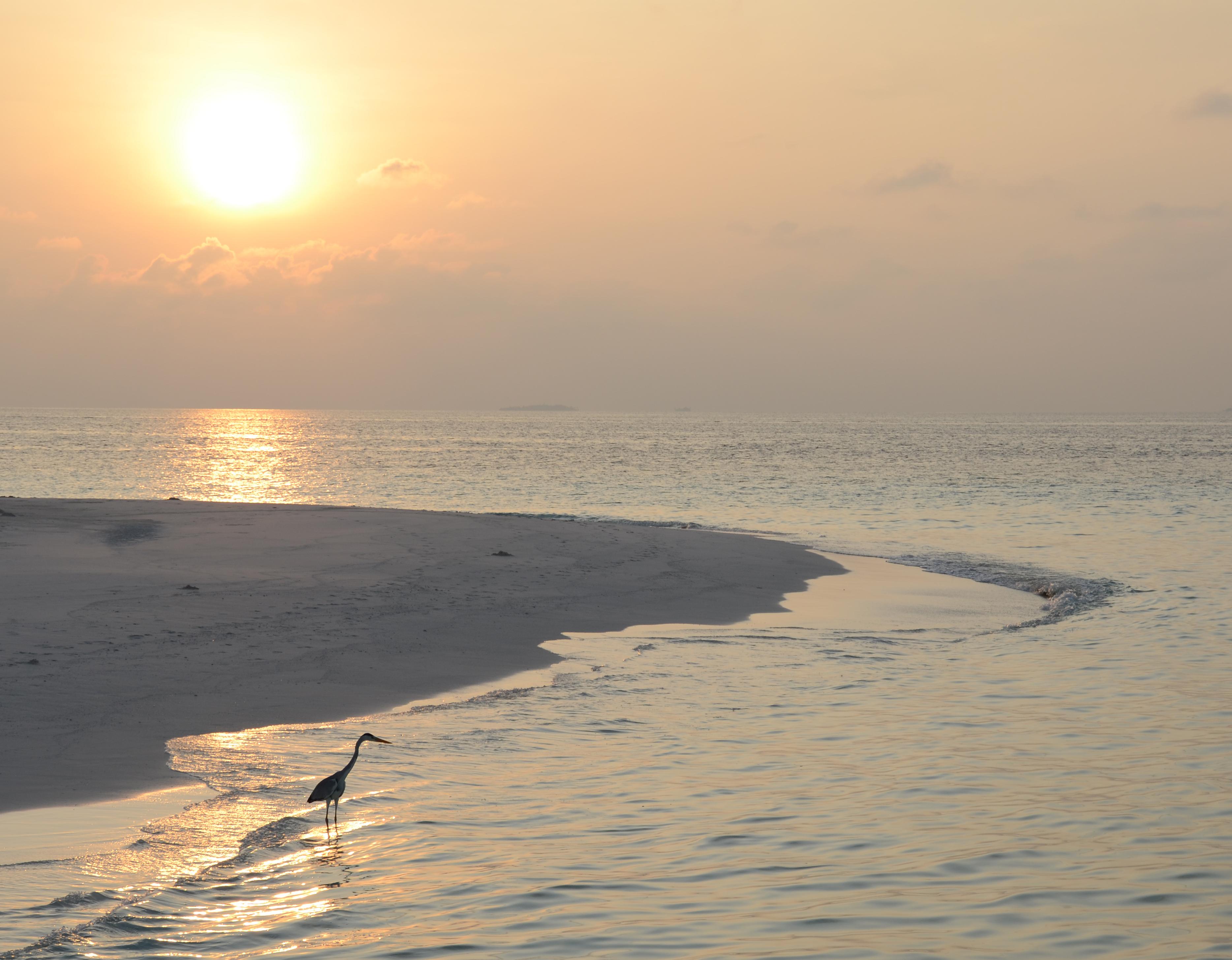 Sunset Dr Grand Island Ny