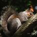 Secretive Squirrel