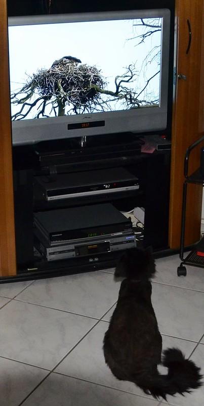Nera watching a bird programme on TV