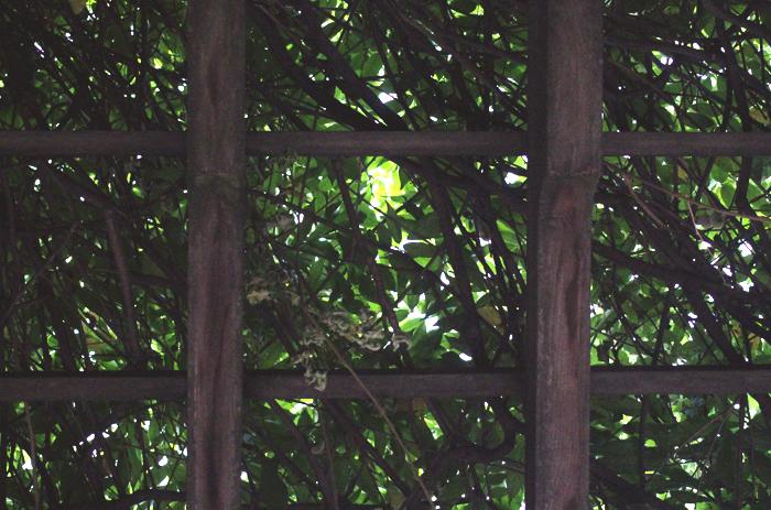 leafy4
