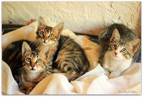 Yeni yavru kedilerimiz