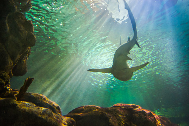 Shark, Underwater, Fish, Light, Beams, Colorful,