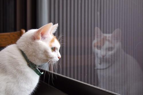 庭の監視は日課です