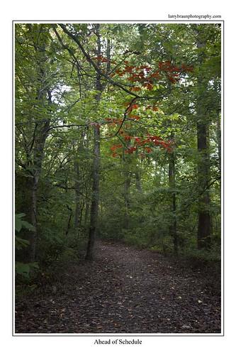 autumn red tree green nature leaves vertical rural forest landscape foliage trail missouri anticipation connection week44 day306 2013 scottcounty generlawatkinsstateconservationarea
