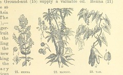 Image taken from page 221 of 'The World's Inhabitants; or, Mankind, animals & plants ... With ... illustrations, etc'