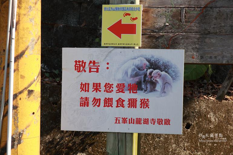 台南私藏景點-南化烏山獼猴 (5)