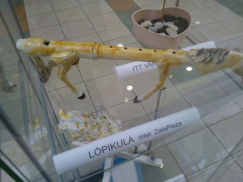 Lópikula
