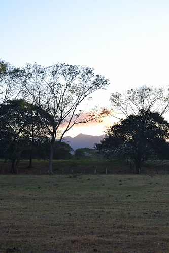 trees light sunset santacruz relax atardecer costarica view calm potrero guanacaste