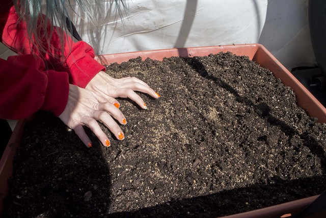 How to Plant Radishes and Carrots_5