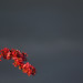 2014_365108 - Blossom Sprig by touchingthelight