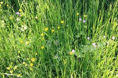Wild Flowers ?
