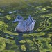 Small photo of American Widgeon, Female