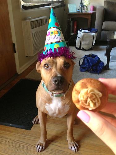 Mona's Birthday Pupcake