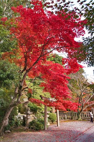 【写真】2012 紅葉 : 光明寺/2020-11-11/IMGP6512