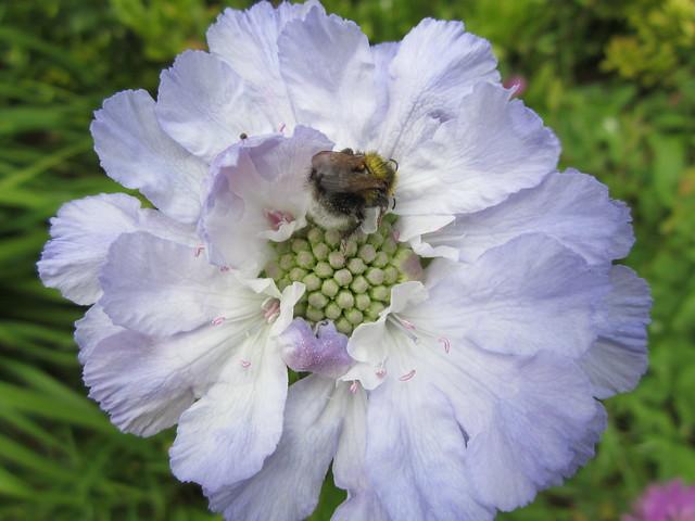 summer garden blooms (12)