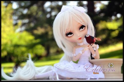Edelweiss pullip alice du jardin for Alice du jardin pullip