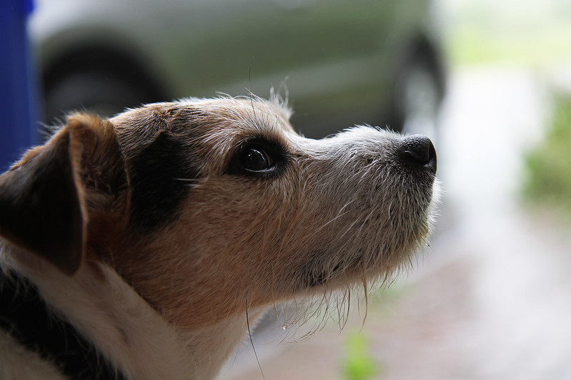 benny watching the rain