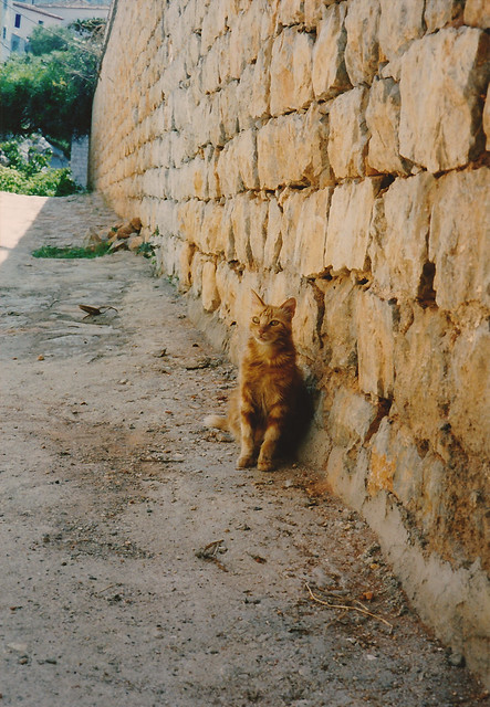 a cat met in Greece
