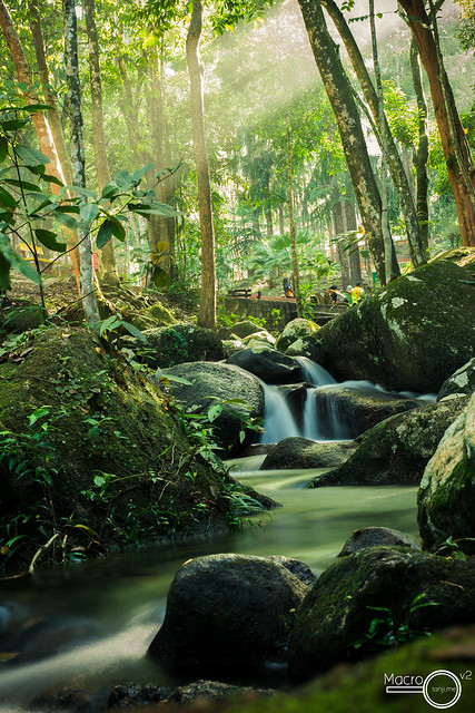 Penang Forest Park- Sun and Stream