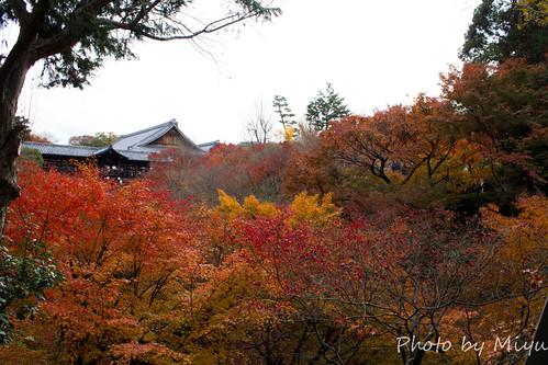 IMG_5058東福寺