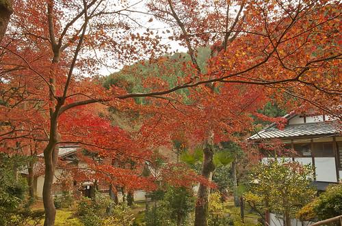 【写真】紅葉 : 吟松寺