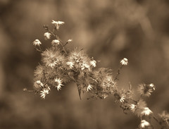 winter weeds 1-