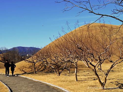 En Gyeongju no es difícil admirar estos túmulos funerarios diseminados por toda la ciudad