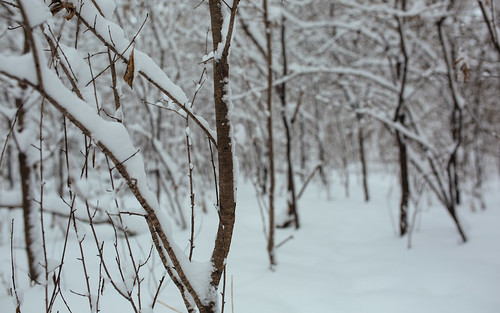 winter snow cold nature wisconsin canon still woods december quiet dof branches depthoffield snowcovered newberlin lowpov canoneos5dmarkiii sigma35mmf14dghsmart