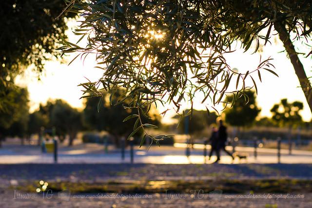 Paseo entre olivos