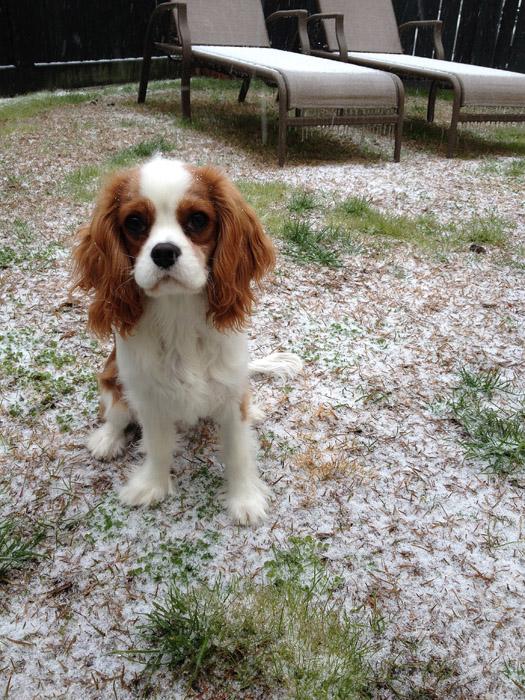 web_winston_snow_4535